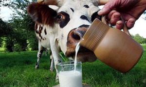 выбирайте натуральное коровье молоко