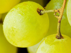 чистить ли виноград от веточек